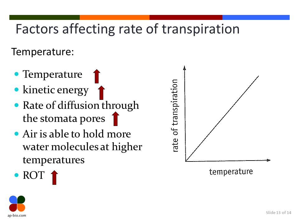 factors effecting transpiration rates Various environmental factors,  this experiment will measure transpiration rates under different conditions of light, humidity, temperature, and air movement.