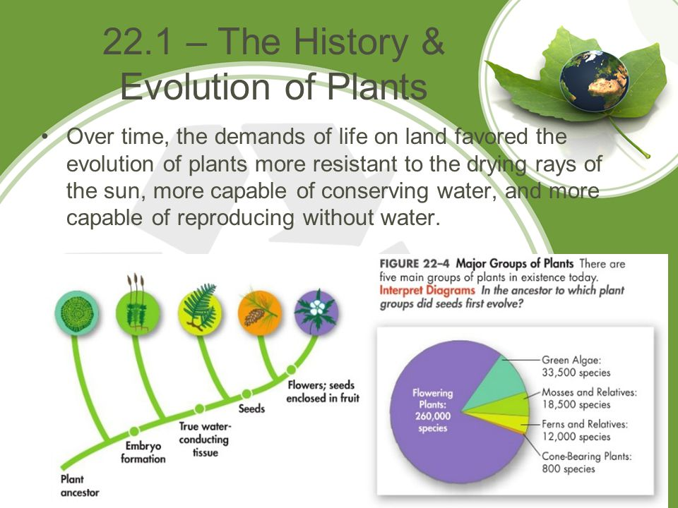 22.1 – The History & Evolution of Plants