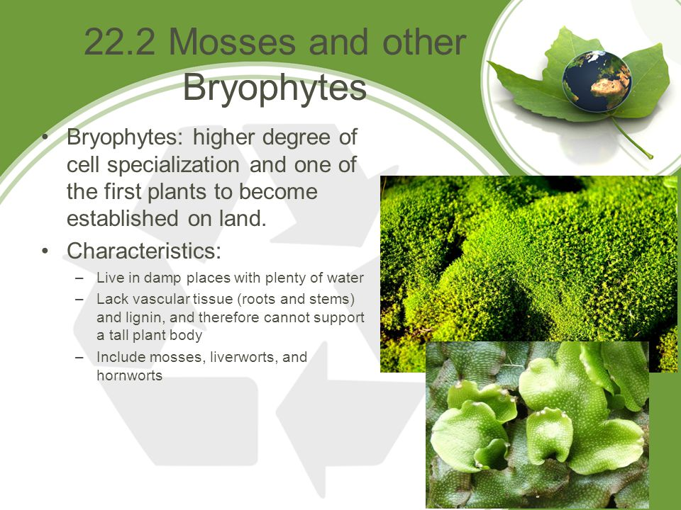 22.2 Mosses and other Bryophytes