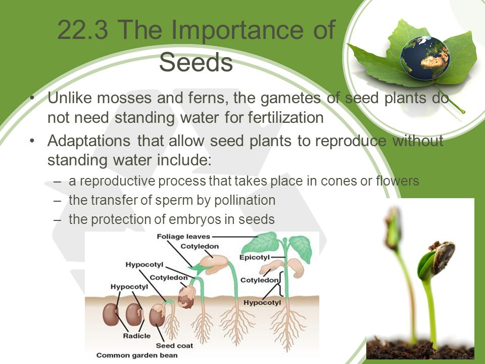 22.3 The Importance of Seeds