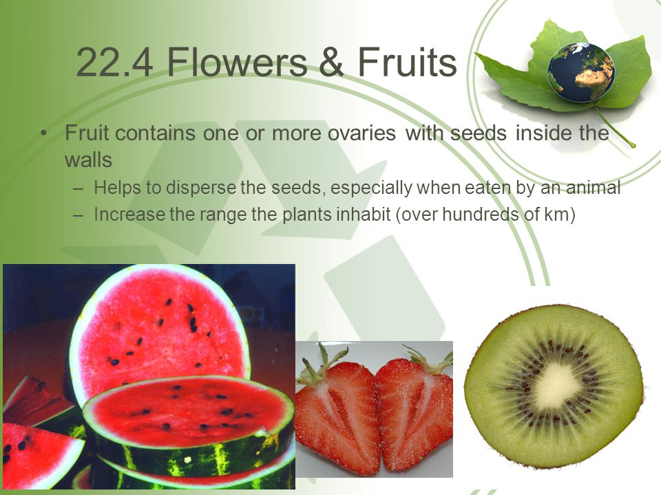 22.4 Flowers & Fruits Fruit contains one or more ovaries with seeds inside the walls.