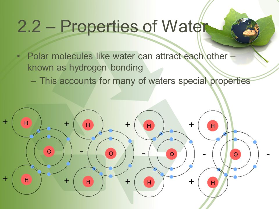 2.2 – Properties of Water Polar molecules like water can attract each other – known as hydrogen bonding.