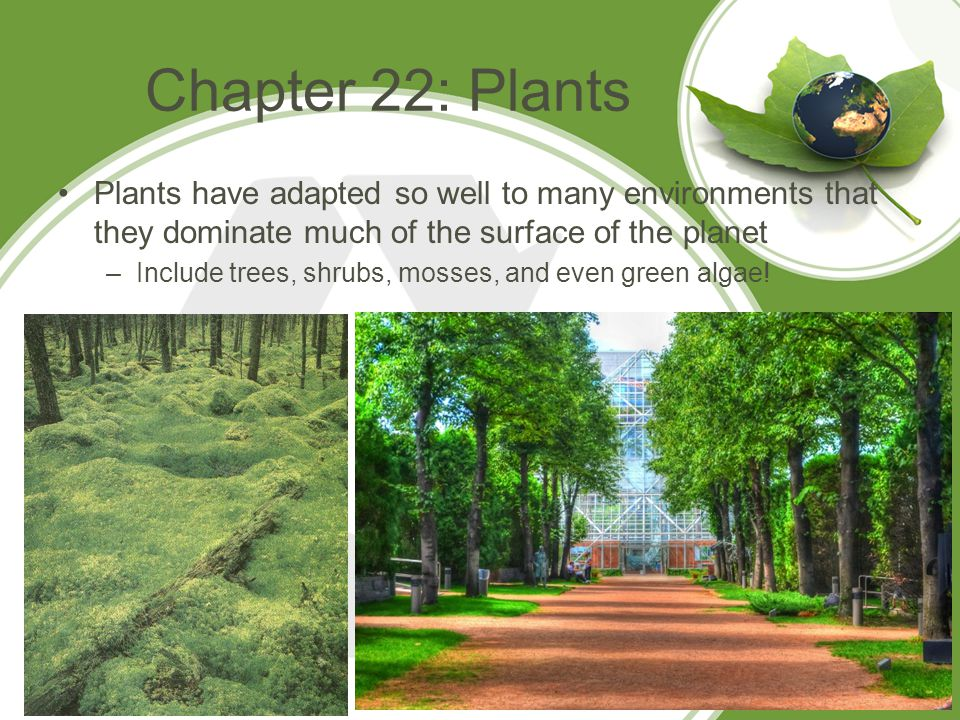 Chapter 22: Plants Plants have adapted so well to many environments that they dominate much of the surface of the planet.