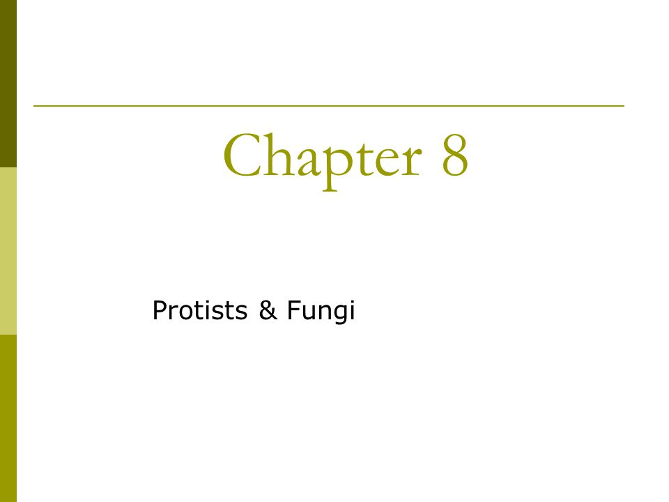 1 Chapter 8 Protists Fungi: Protists And Fungi Worksheet At Alzheimers-prions.com