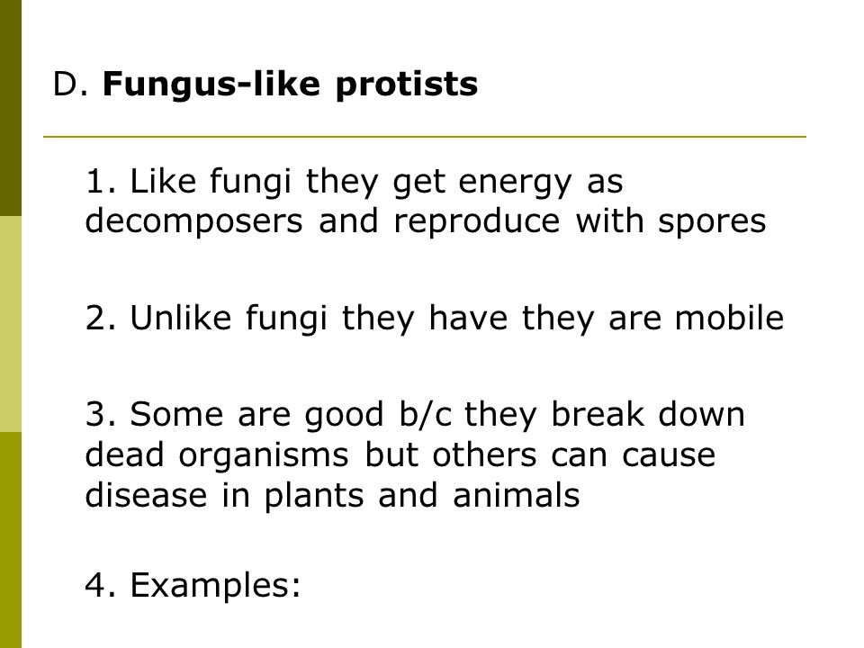 Chapter 8 Protists Fungi ppt video online download – Protists Worksheet