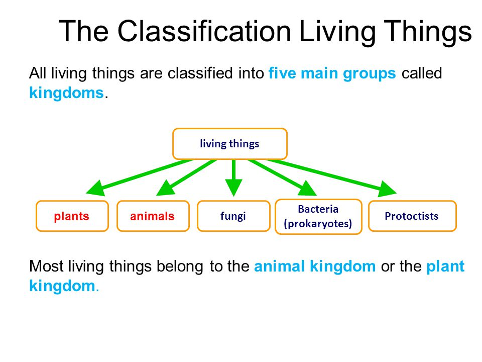 Printable Worksheets five kingdoms of living things worksheets : Classification Classification - ppt video online download