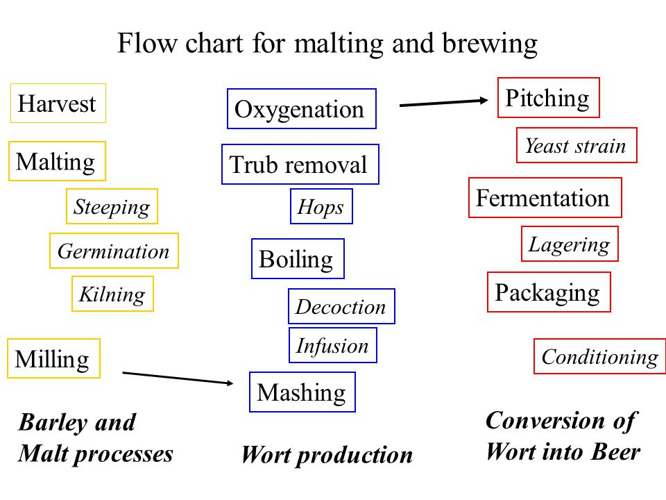 Flow Chart For Malting And Brewing Ppt Video Online Download