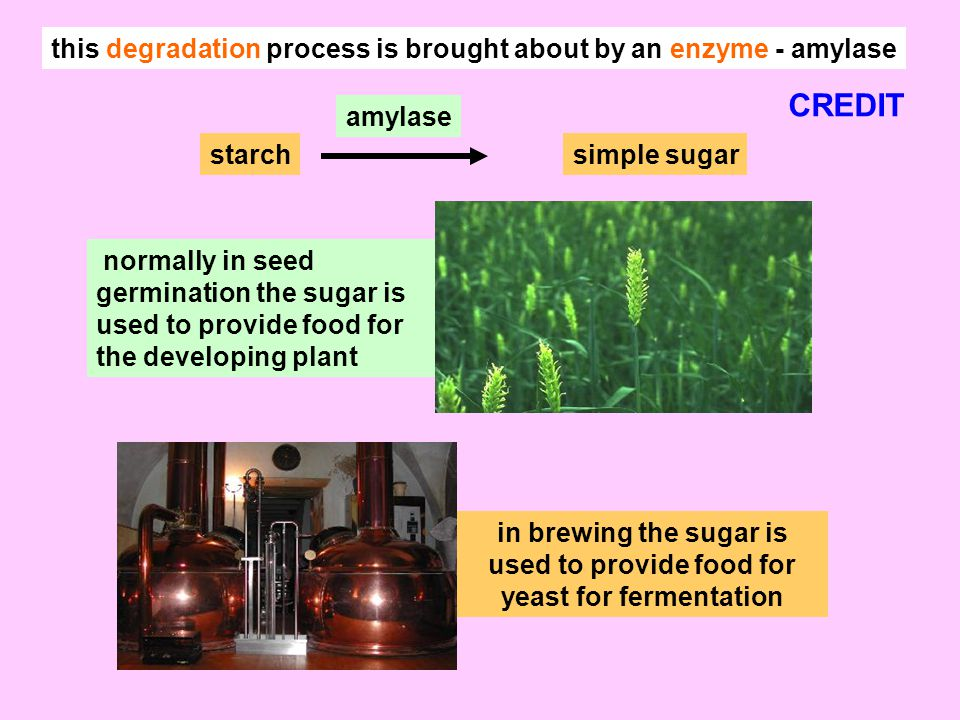 this degradation process is brought about by an enzyme - amylase