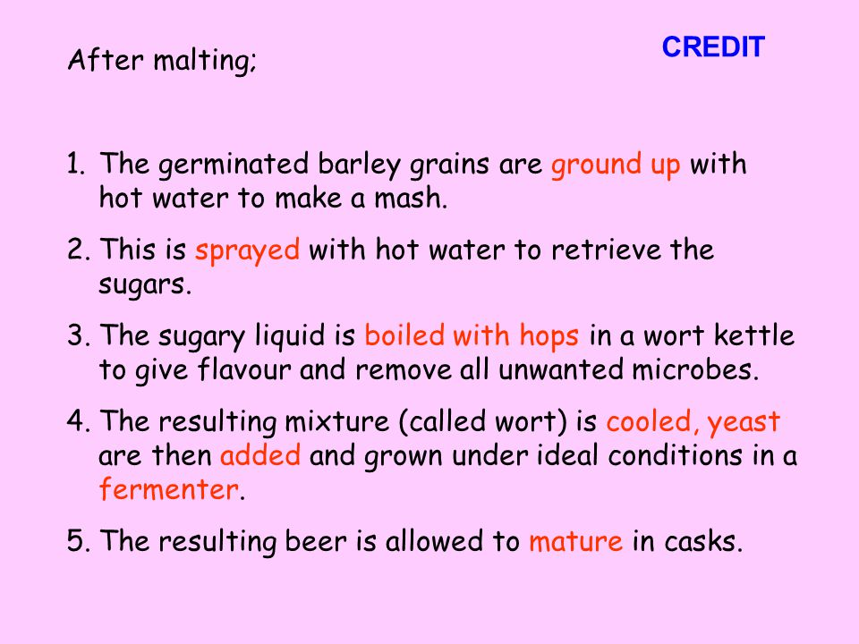 CREDIT After malting; The germinated barley grains are ground up with hot water to make a mash.