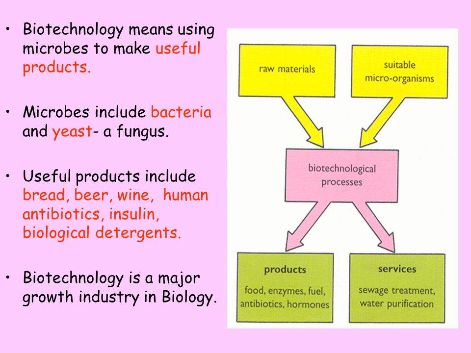 Biotechnology means using microbes to make useful products.