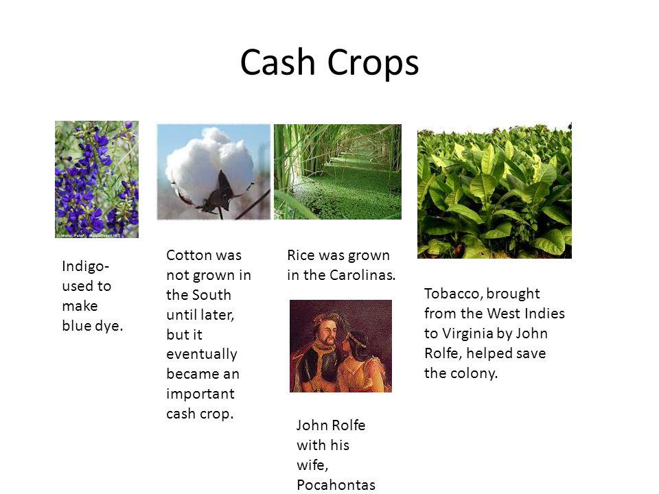 Rhode Island Colony Cash Crop