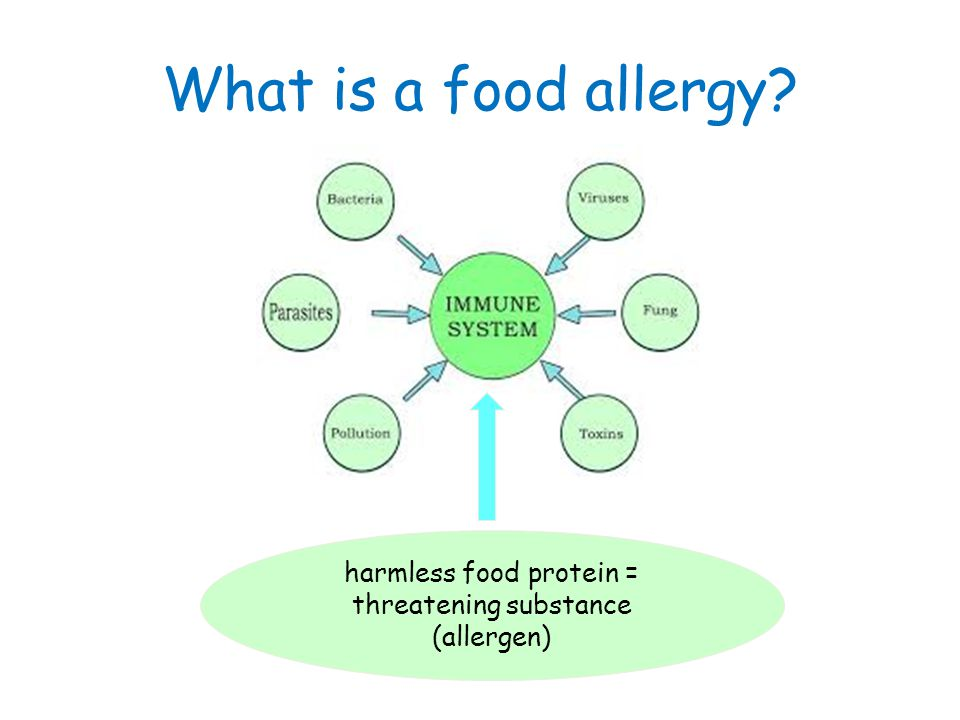 Cat Food Protein Allergy