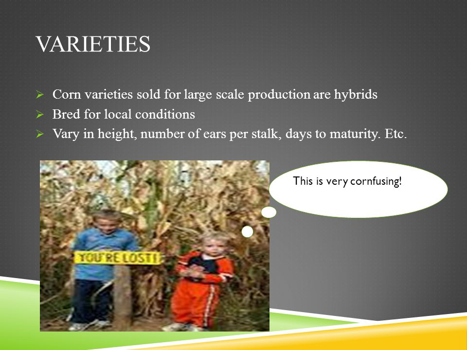 Varieties Corn varieties sold for large scale production are hybrids