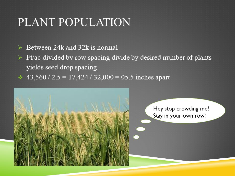Plant population Between 24k and 32k is normal
