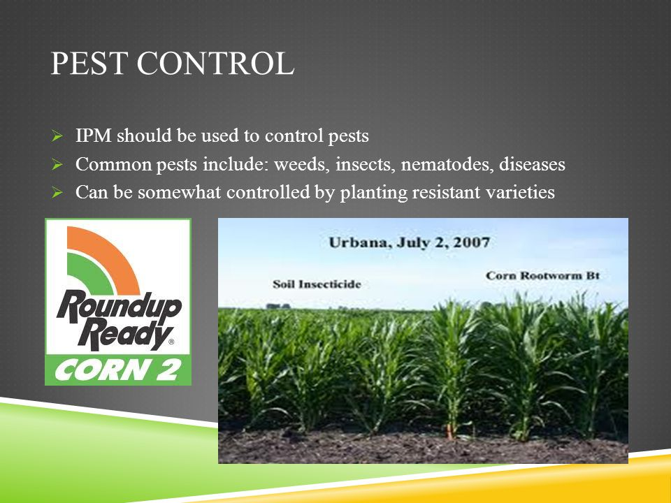 Pest Control IPM should be used to control pests