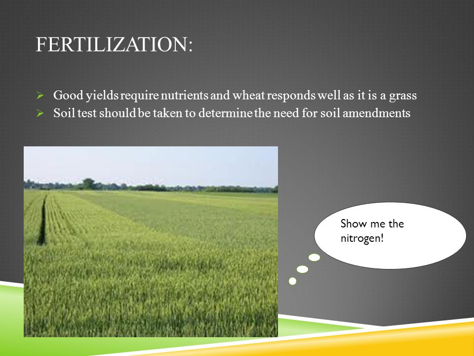 Fertilization: Good yields require nutrients and wheat responds well as it is a grass.