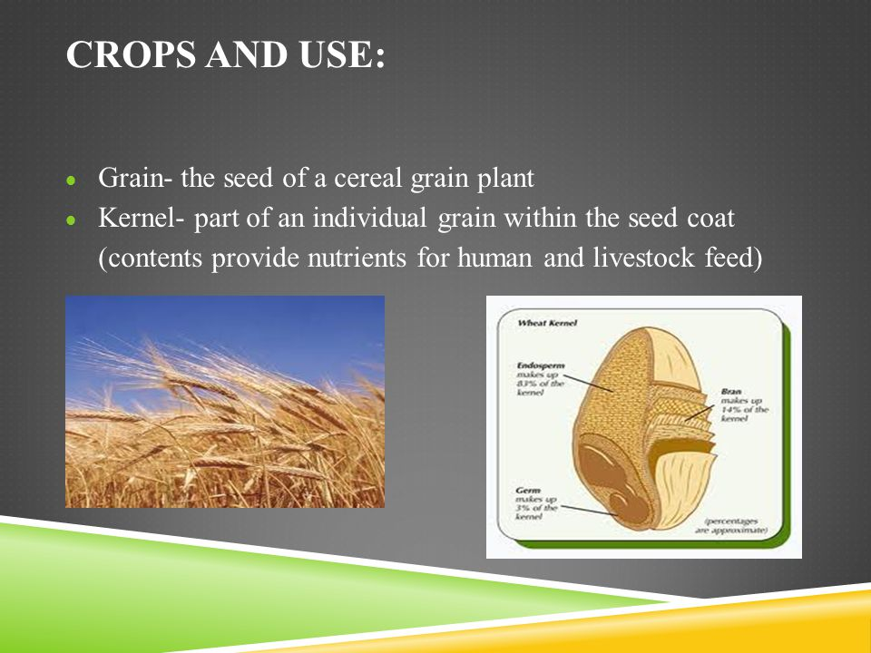 Crops and Use: Grain- the seed of a cereal grain plant