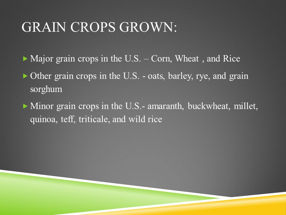 Grain crops grown: Major grain crops in the U.S. – Corn, Wheat , and Rice. Other grain crops in the U.S. - oats, barley, rye, and grain sorghum.