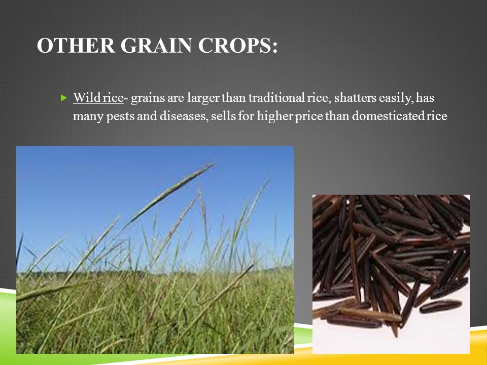 Other grain crops: