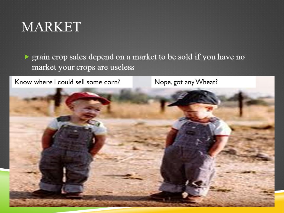 Market grain crop sales depend on a market to be sold if you have no market your crops are useless.