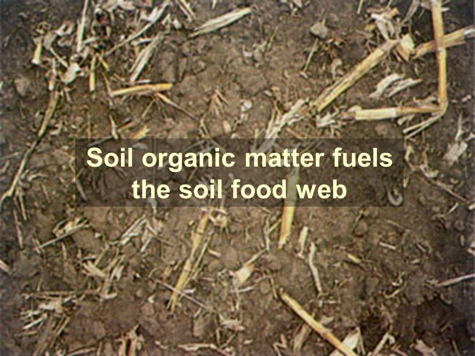 Who lives in the soil the furrow ppt video online for Soil organic matter