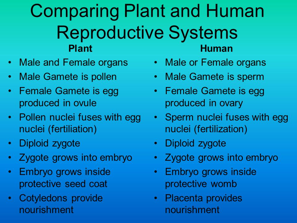 What Are the Differences between the Male and Female Reproductive Systems?