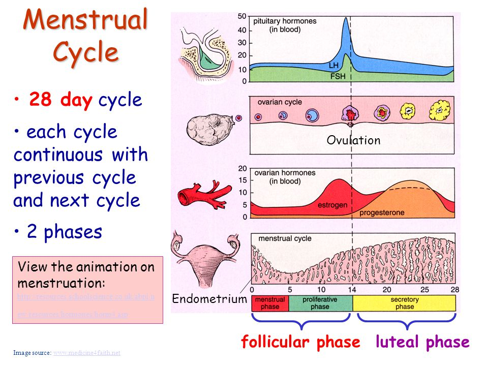 protected sex and late period Menstrual cycle period