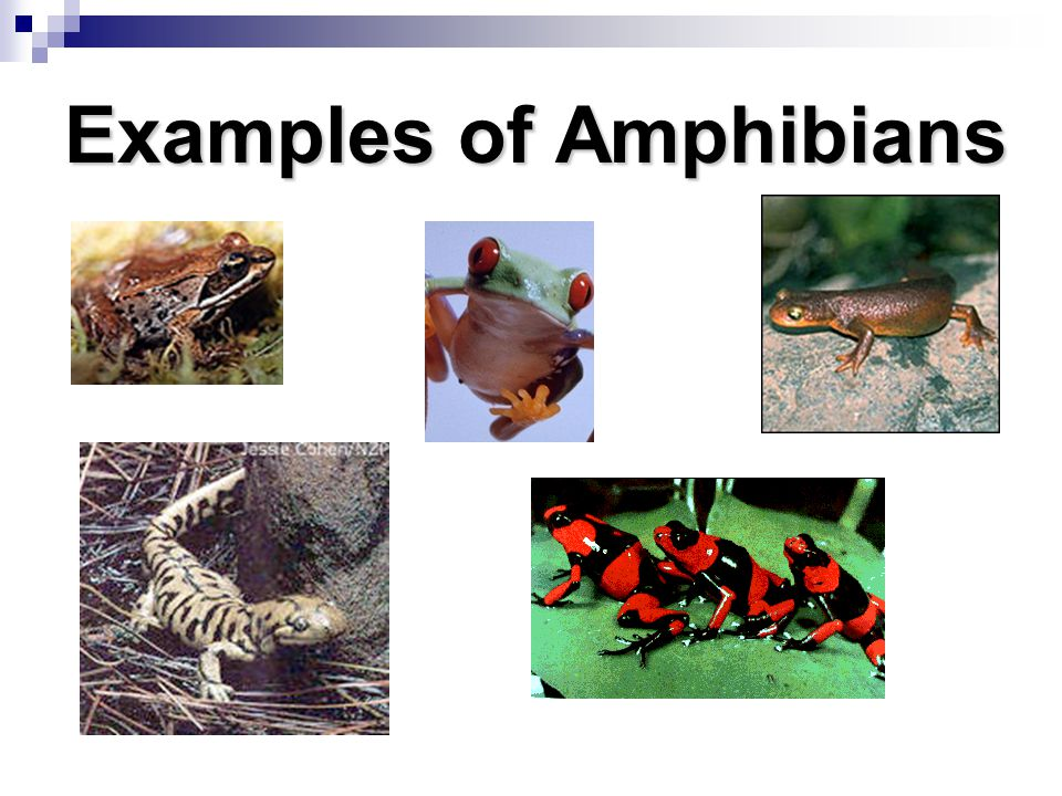 Animal Classification A Writing Across Curriculum Activity - ppt ...