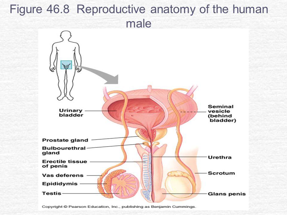 Ziemlich Invertebrate Anatomie Online Fotos - Menschliche Anatomie ...