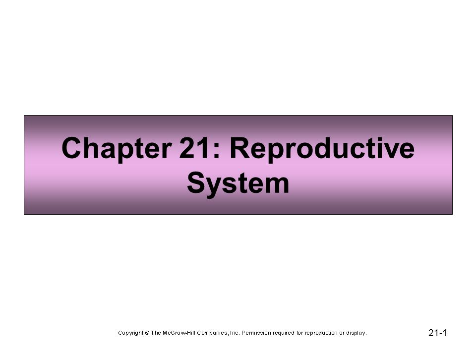 Chapter 21: Reproductive System - ppt video online download