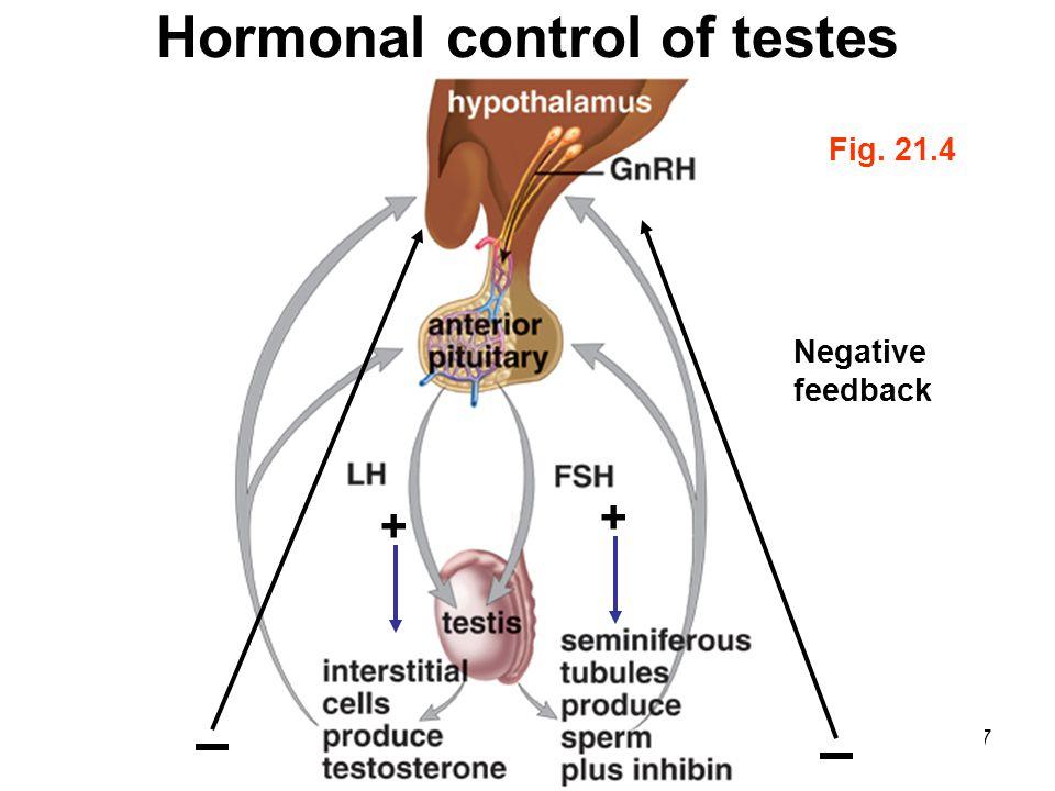 Control Hormonal Feedback