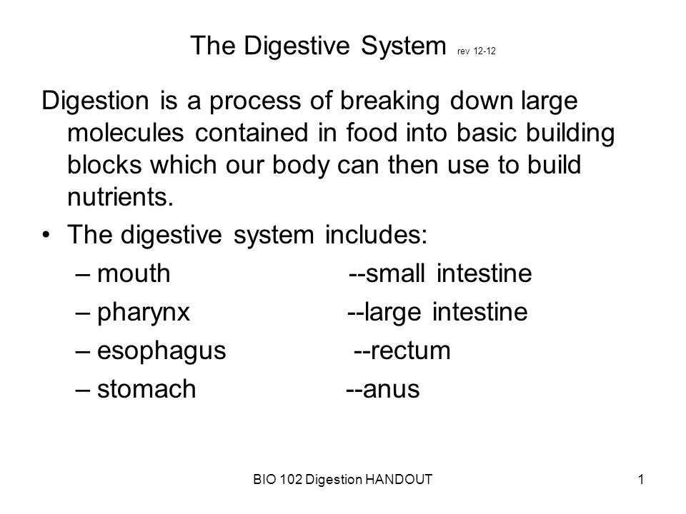 a description of digestion as a process of breaking down food into small particles