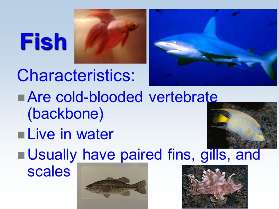 Classification ppt video online download for List of fish with fins and scales
