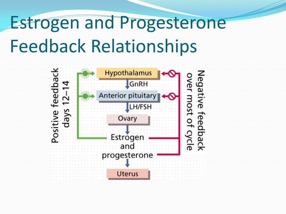 Estrogen and Progesterone Feedback Relationships