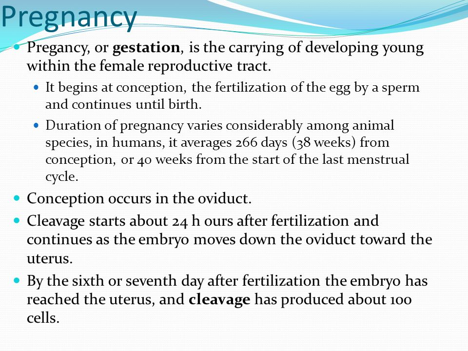 Pregnancy Pregancy, or gestation, is the carrying of developing young within the female reproductive tract.