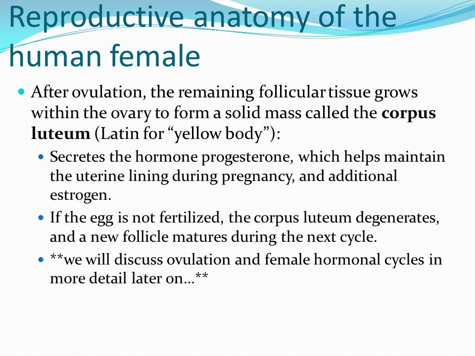 Reproductive anatomy of the human female