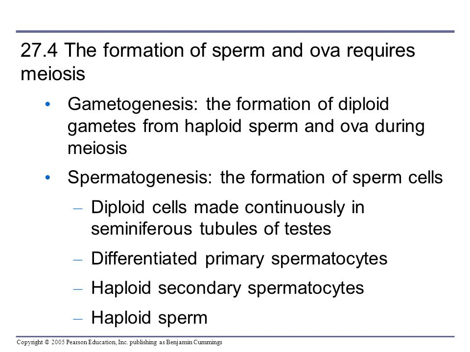 formation of sperm essay When do human beings begin stem cell research, and the formation of mixed-species chimeras) a mature human sperm and a.