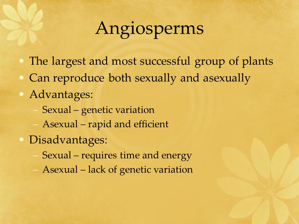 Angiosperms The largest and most successful group of plants