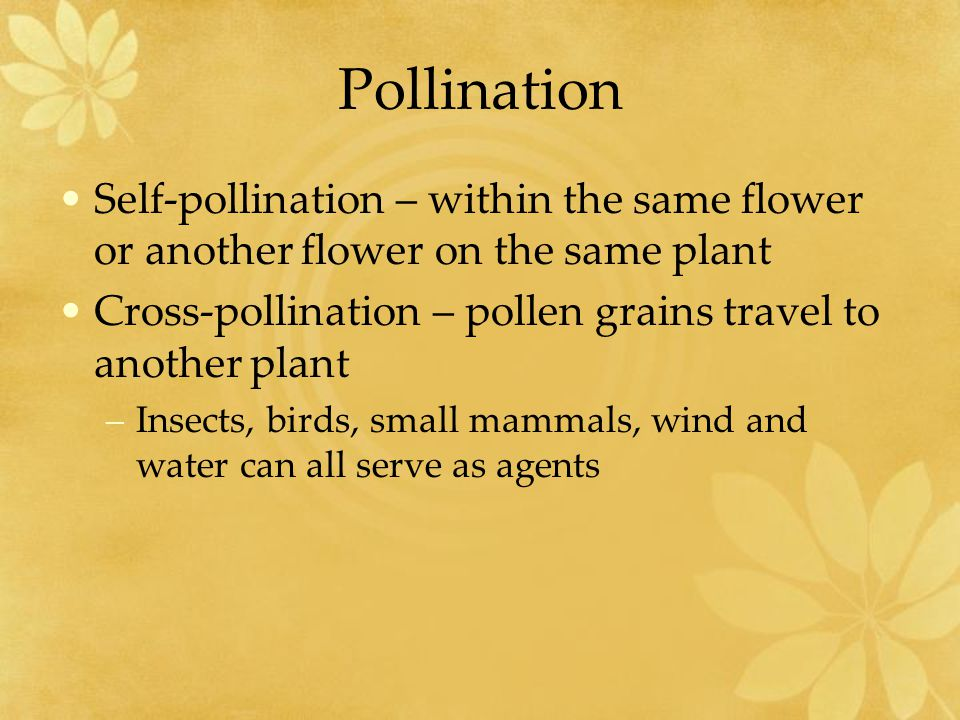 Pollination Self-pollination – within the same flower or another flower on the same plant. Cross-pollination – pollen grains travel to another plant.