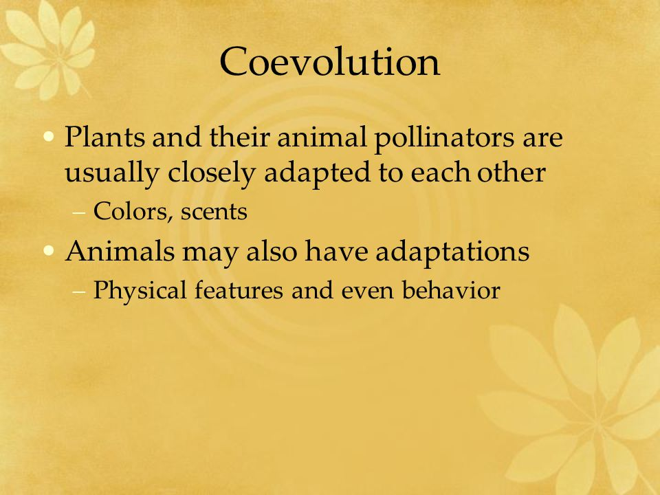 Coevolution Plants and their animal pollinators are usually closely adapted to each other. Colors, scents.