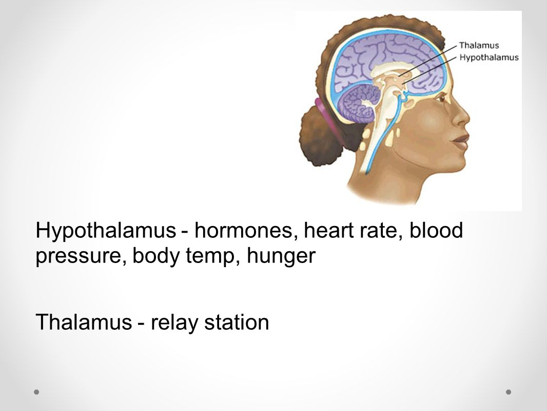 Hypothalamus - hormones, heart rate, blood pressure, body temp, hunger Thalamus - relay station