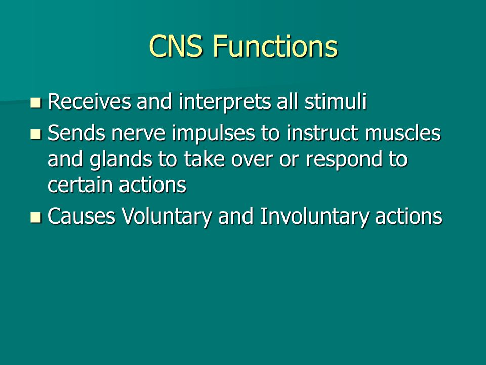 CNS Functions Receives and interprets all stimuli