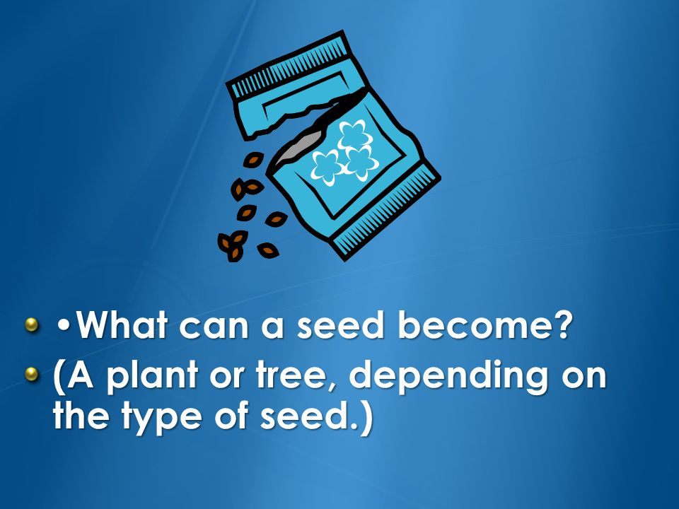•What can a seed become (A plant or tree, depending on the type of seed.)