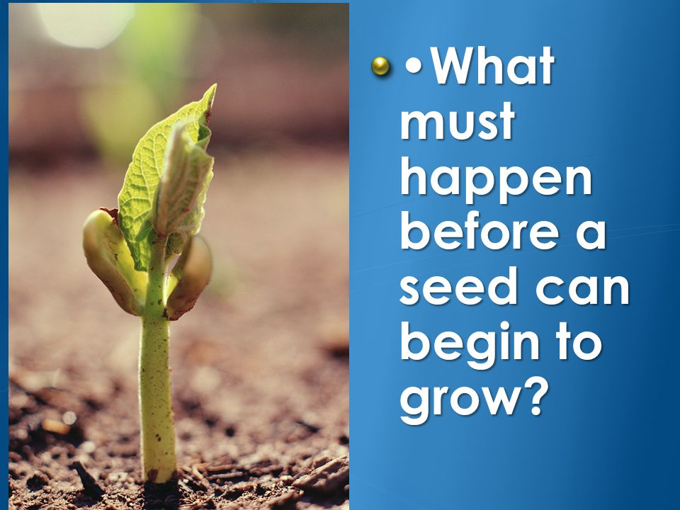 •What must happen before a seed can begin to grow