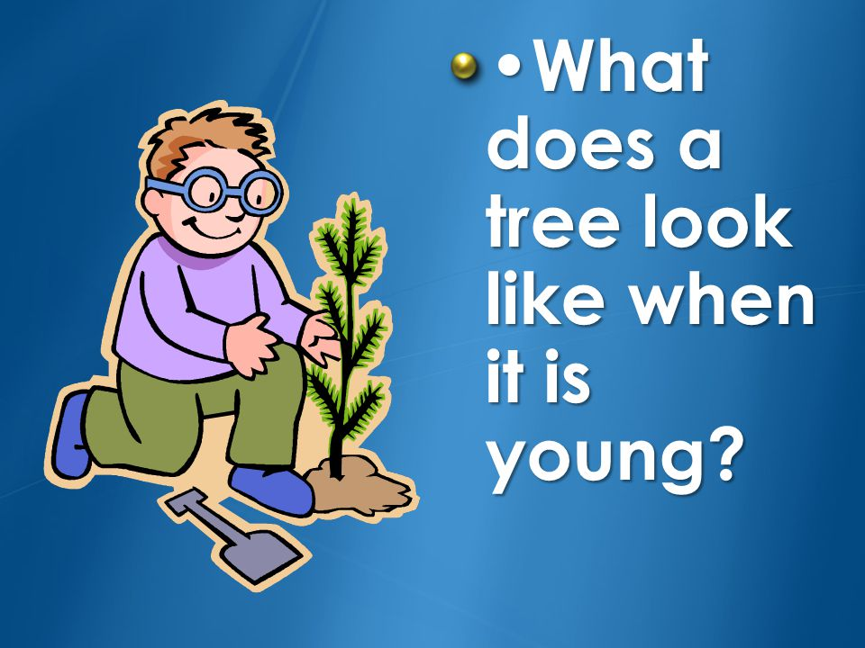•What does a tree look like when it is young