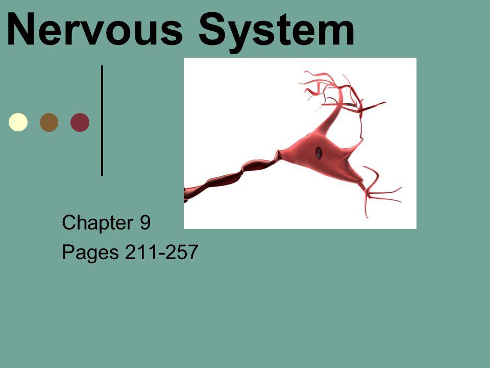 Nervous System Chapter 9 Pages ppt video online download