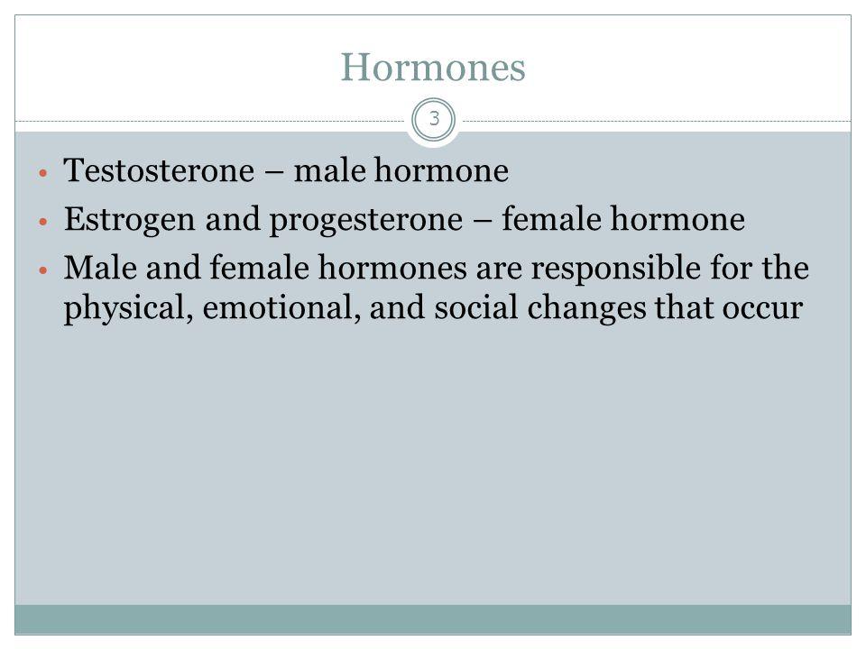 Hormones Testosterone – male hormone