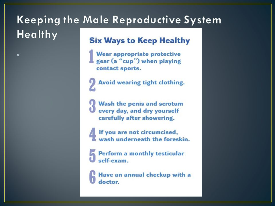 Keeping the Male Reproductive System Healthy