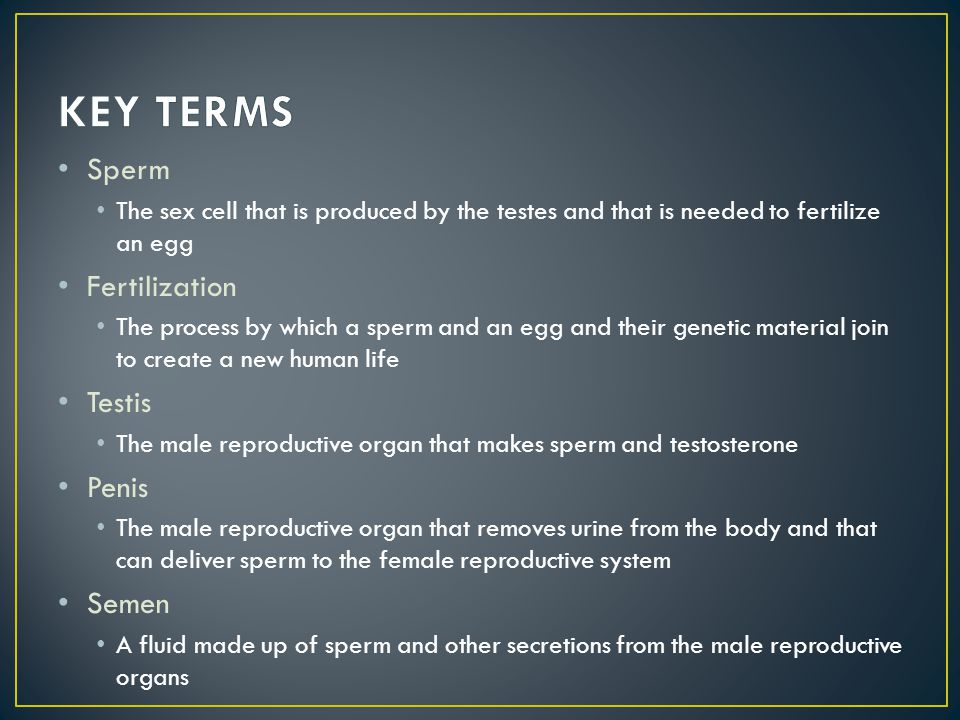 KEY TERMS Sperm Fertilization Testis Penis Semen