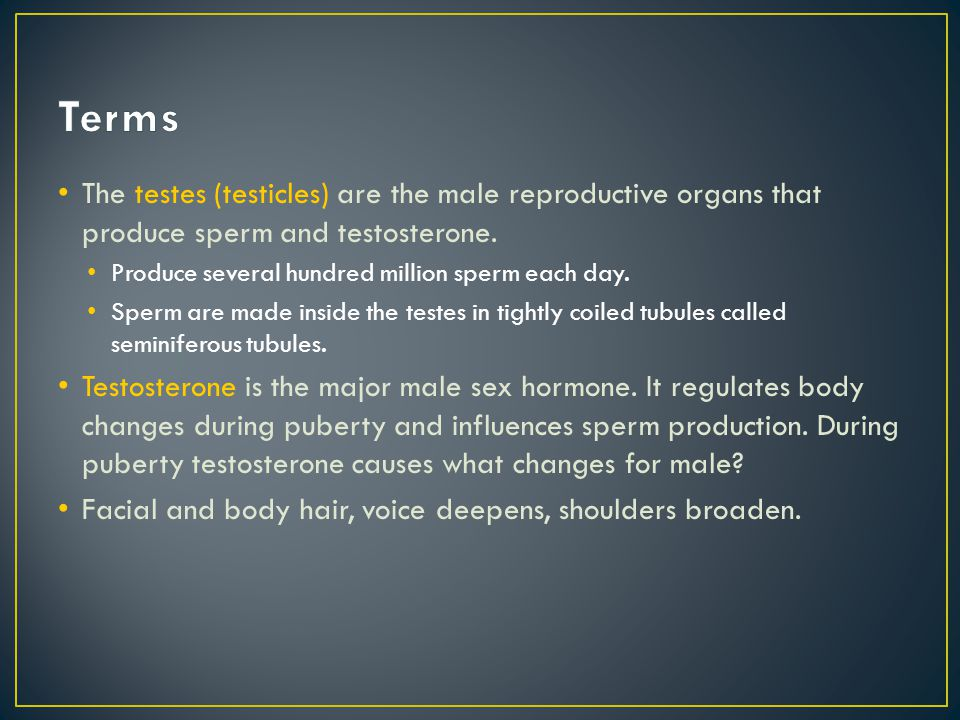 Terms The testes (testicles) are the male reproductive organs that produce sperm and testosterone. Produce several hundred million sperm each day.